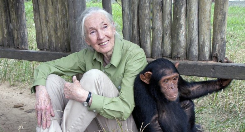 jane goodhall the hope